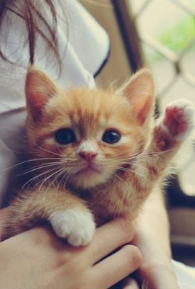 Hello Kitty! - czyli dzień kociaka :)