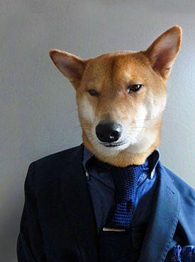 Pieska elegancja , czyli Menswear Dog